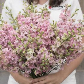Galilee Pink Perfection Organic Flowers