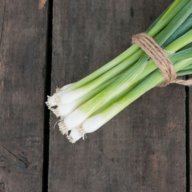 White Spear Bunching Onions
