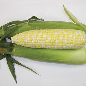 Montauk Sweet Corn