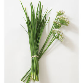 Chinese Leeks/Garlic Chives Chinese Leeks (Garlic Chives)