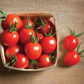 Cherry Bomb Cherry Tomatoes