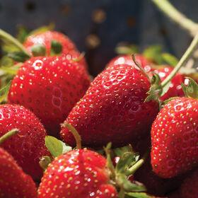 Elan Strawberry Plugs