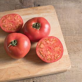Damsel Tomatoes