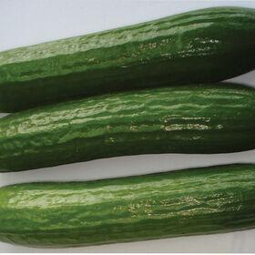 Amiga Seedless and Thin-skinned Cucumbers