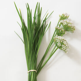 Chinese Leeks/Garlic Chives