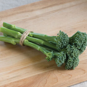 Apollo Broccoli X Gailon