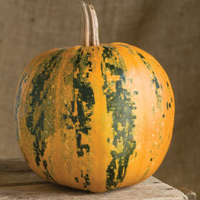 Kakai Specialty Pumpkins
