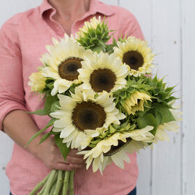 ProCut® White Nite Tall Sunflowers