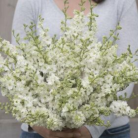 Galilee White Organic Flowers