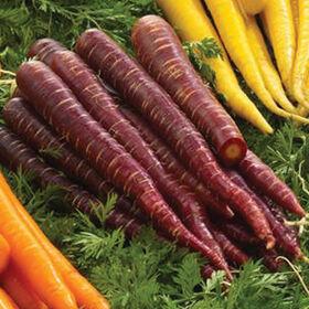 Purple Elite Colored Carrots