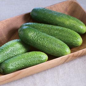 Harmonie Pickling Cucumbers